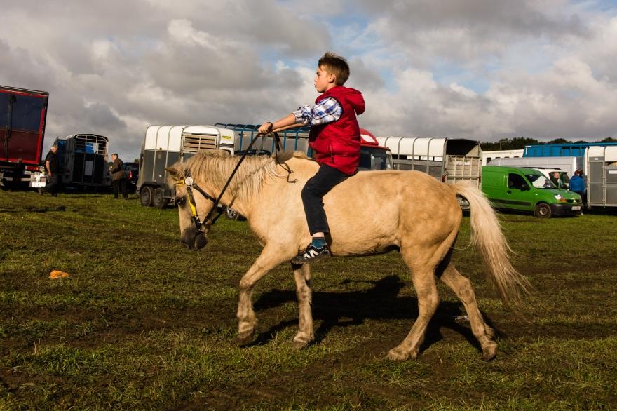 Horse Fair 6